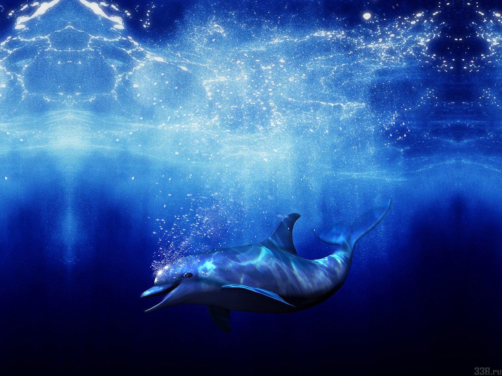 fond d ecran dauphin